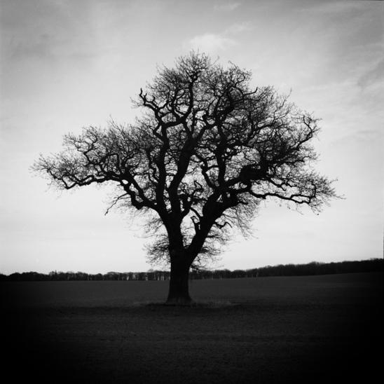 Solitude III by danny-lad