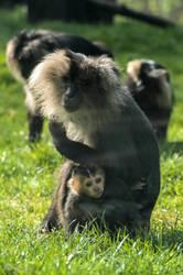 Monkeys :). by Margariites
