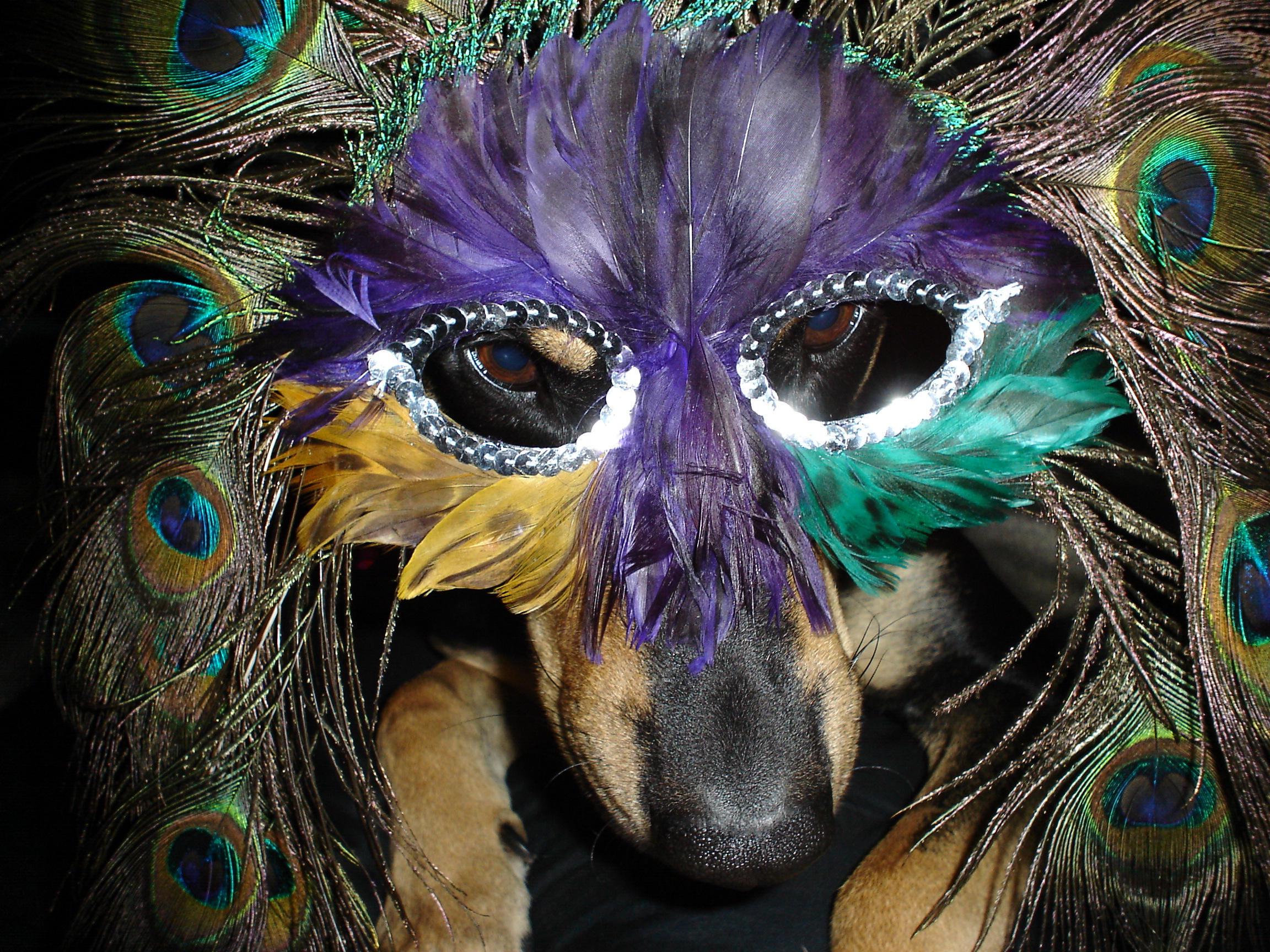 Via ... & 17 Dogs Who Are Ready For Mardi Gras