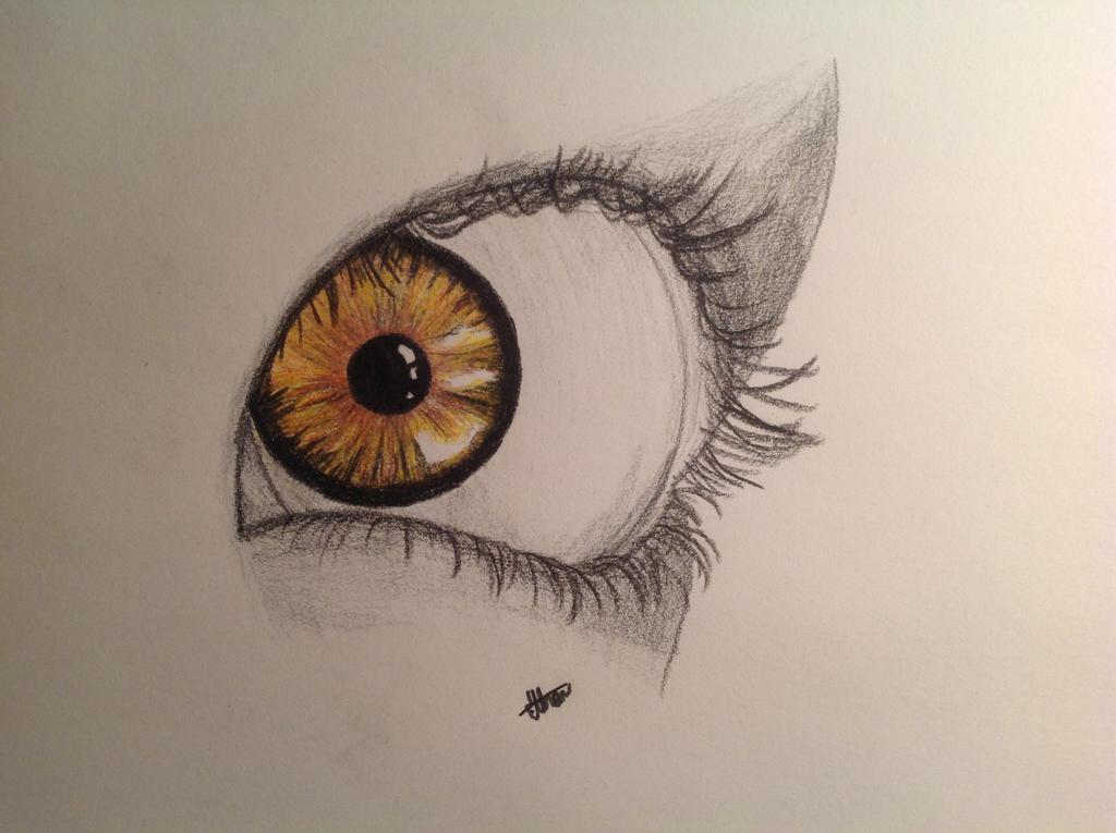 Orange Eye by LoneWolfX33