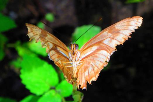 Butterfly Underbelly