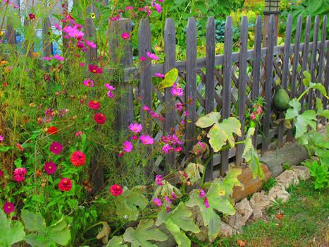 Cosmo Garden