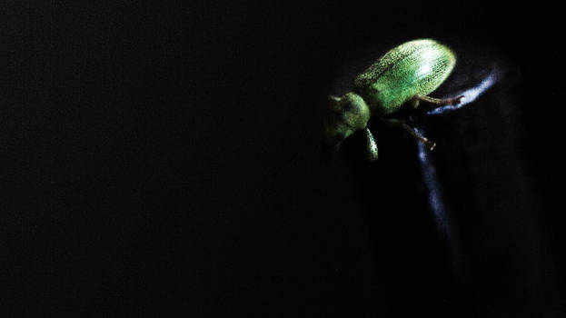 Beetle thing