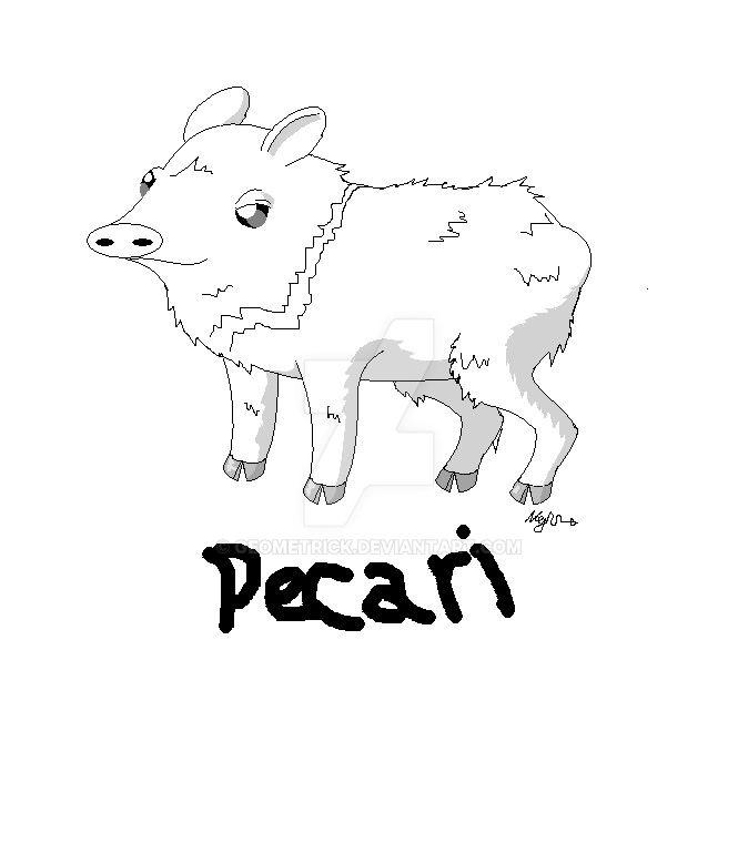 Dibujo pecari de collar by geometrick on DeviantArt