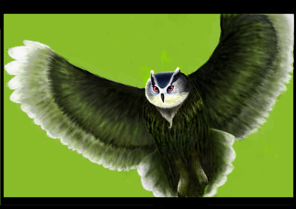 Owl by TszFungDavidWong