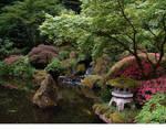 Japanese Garden Scape