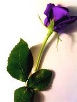 The Purple Rose by redheadgirl32