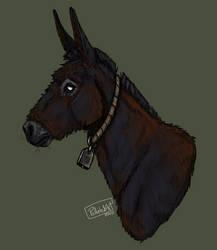 Happy World Donkey Day