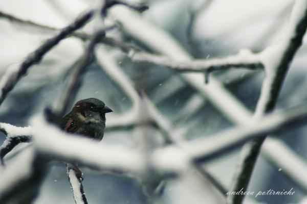 Winter by L1feSux