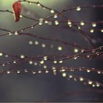 Rainy Day II by L1feSux