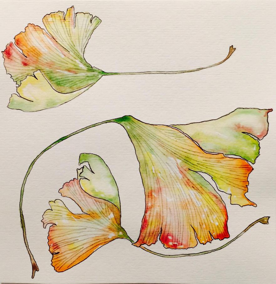 ginkgo leaves by mybuttercupart on deviantart