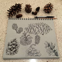 Pinecone Study by mybuttercupart