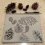 Pinecone Study