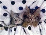 little kitten's by frolloesmeraldalove