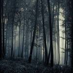 -FoReST III-