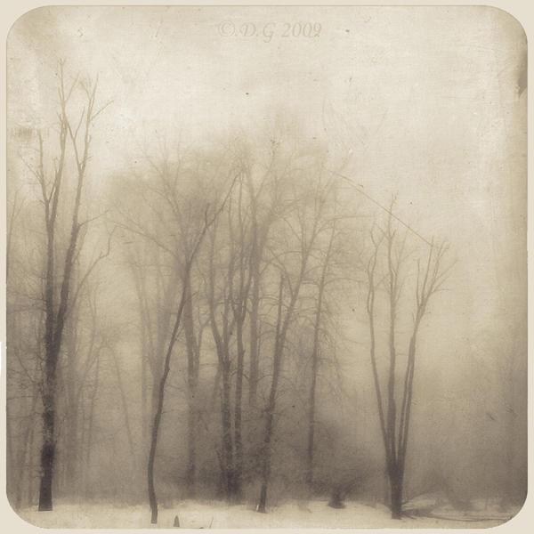 -MistY FoReST- by DilekGenc