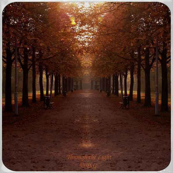 Through the Light by DilekGenc