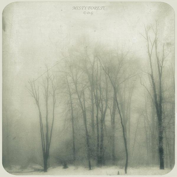 MistY Forest- by DilekGenc