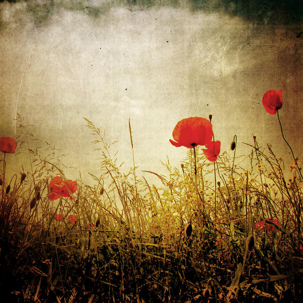 PoppY... by DilekGenc