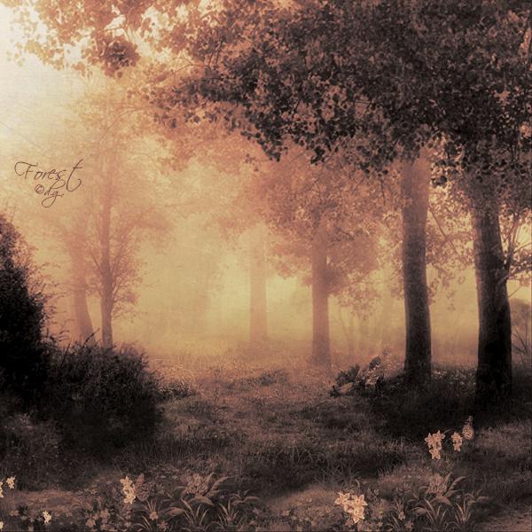Forest v2 by DilekGenc