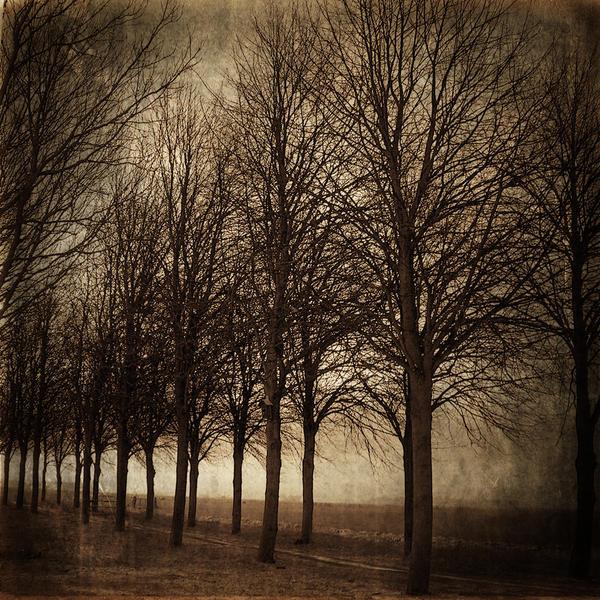 Lost in Woods by DilekGenc