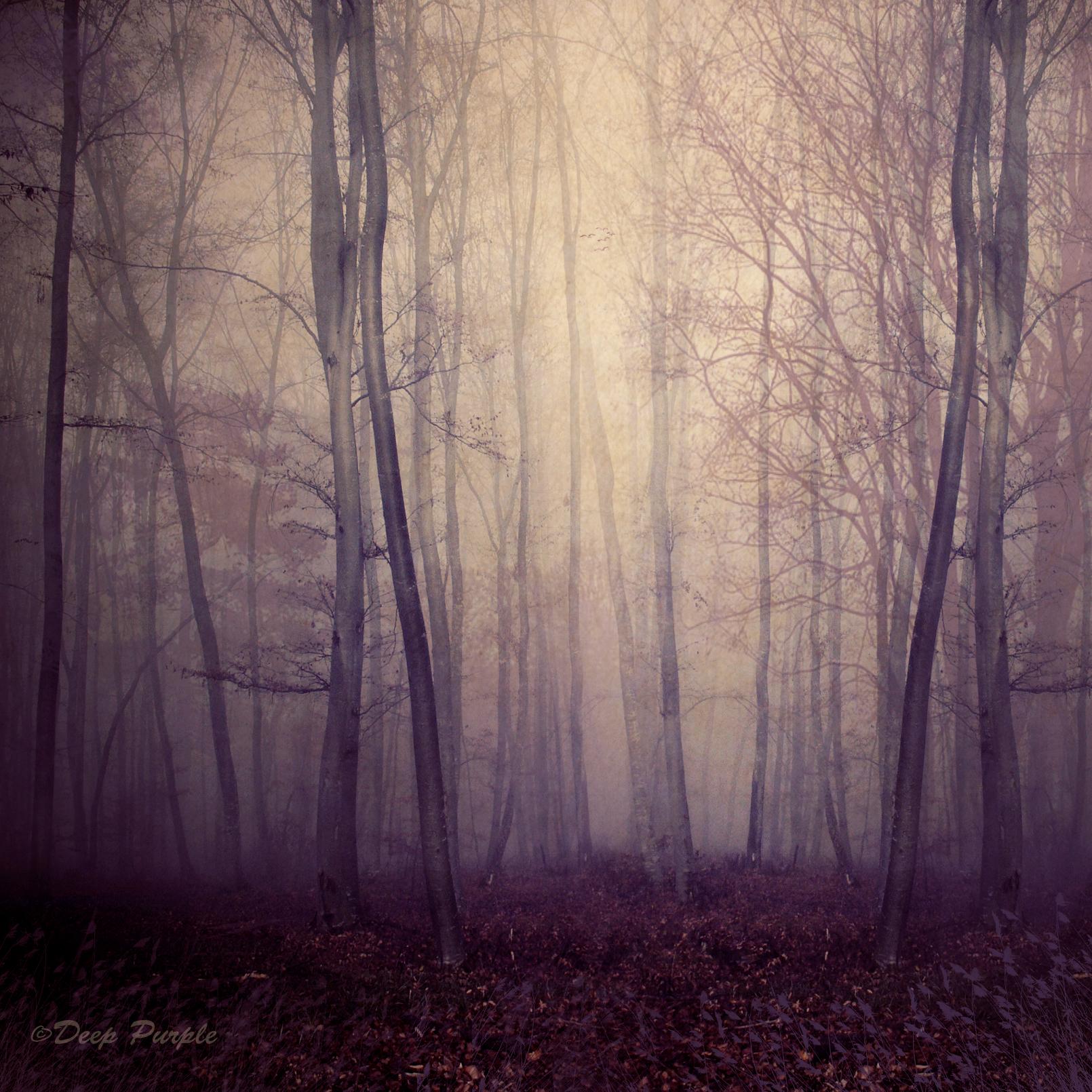 Deep Purple by DilekGenc