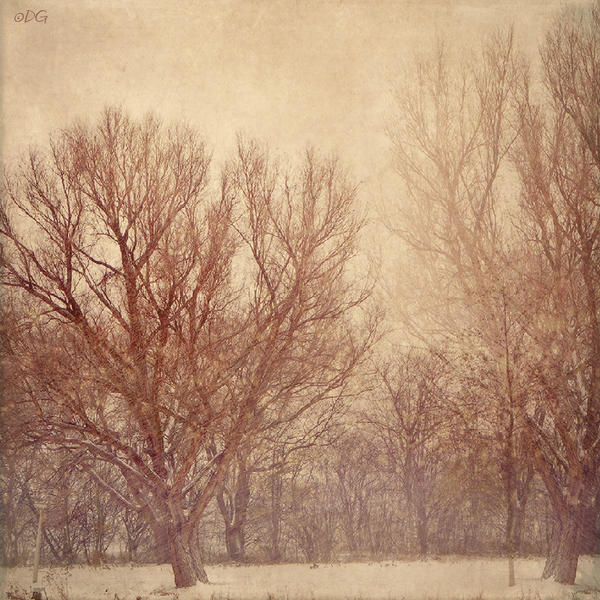 Winter Tale by DilekGenc