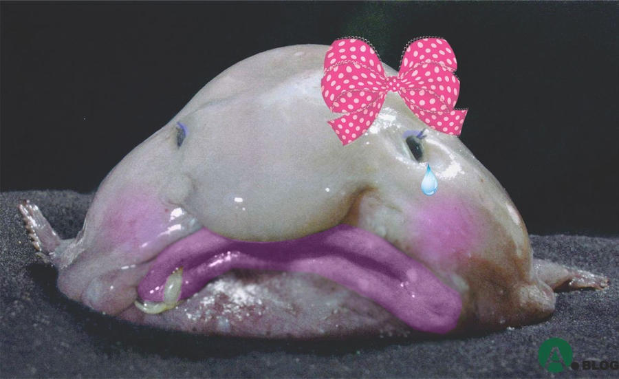Nodoby love the blobfish by jessnetto on deviantart for Ugly fish blob