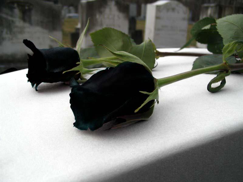 Black by KonekoNyanNyan