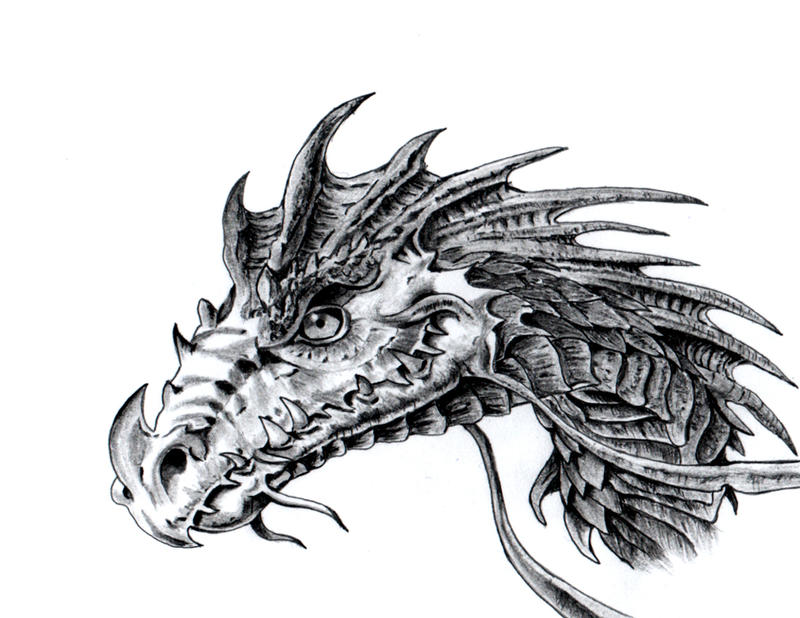 Dragon Head By Dielectric m On DeviantArt