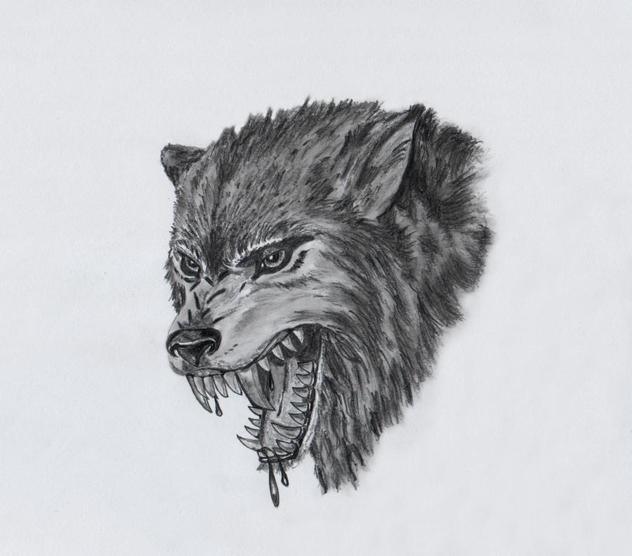 Gallery For gt Wolf Head Drawings