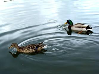 Duckies by Ixiii