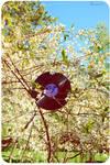 Retro spring. by Bunnis
