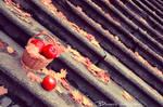 Tasty autumn made of apple.