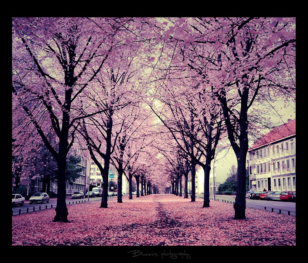 Autumn magic on the street. by Bunnis