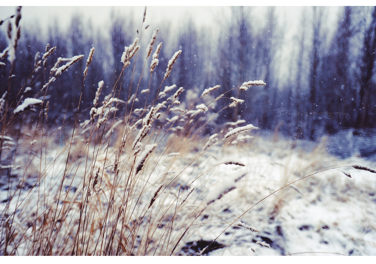 Winter wind of change. by Bunnis