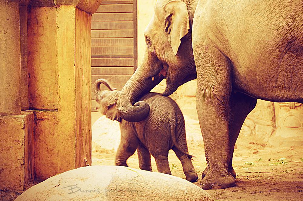 Hey mummy! by Bunnis