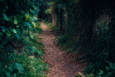 Paths-1 by PSD-stocks999