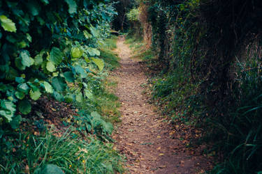 Paths-2 by PSD-stocks999