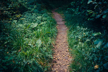 Paths-3 by PSD-stocks999