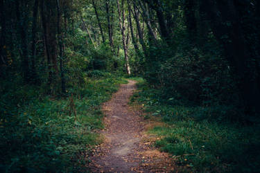 Paths-5 by PSD-stocks999