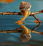 A Snail Kissing Water (Painting Study)