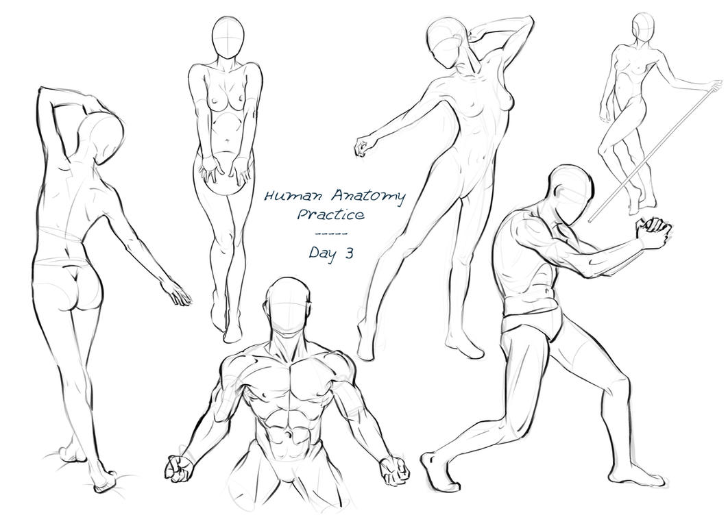 Anatomy Practice - Day 3 by Nixri on DeviantArt