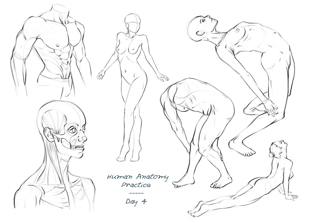 Anatomy Practice - Day 4 by Nixri on DeviantArt