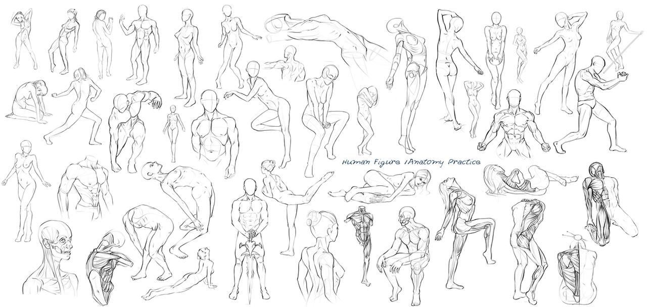 Figure Anatomy Drawings Week Completed By Nixri On Deviantart