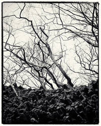 Trees and Stones 01
