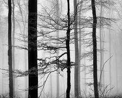 A Strip of Trees 06