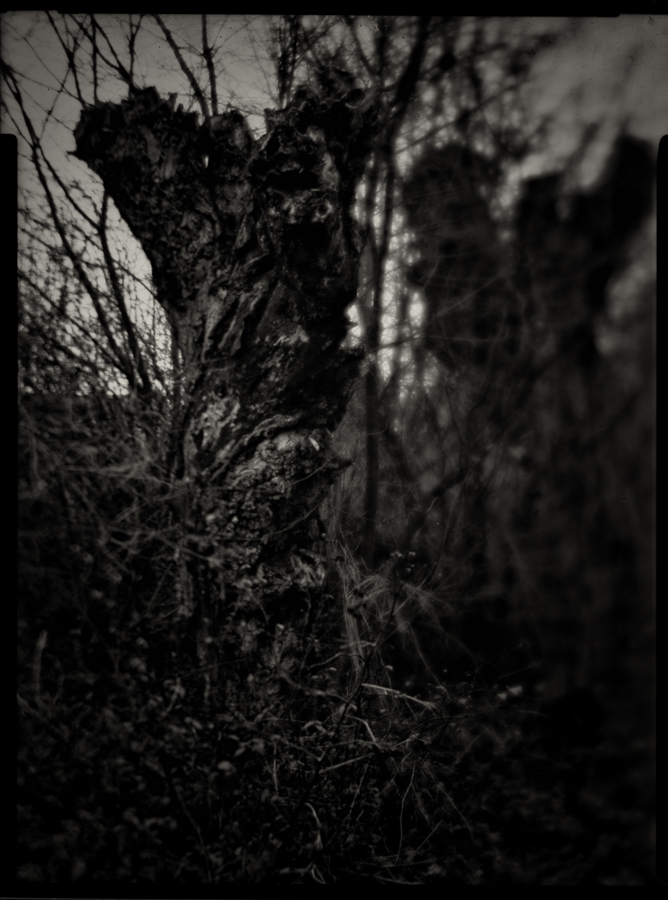 Three Willows 03 by HorstSchmier