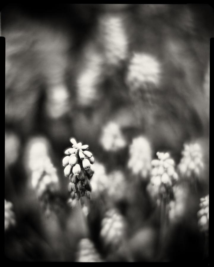 Spring  01 by HorstSchmier
