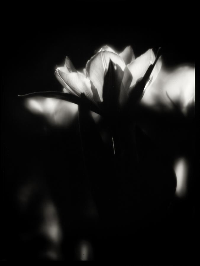 Spring 02 by HorstSchmier